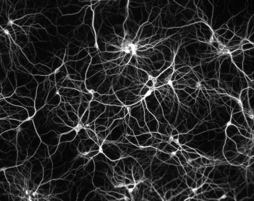 NEWS: Initial funding for Mycelium networking project